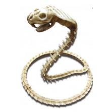 Kostra Kobra
